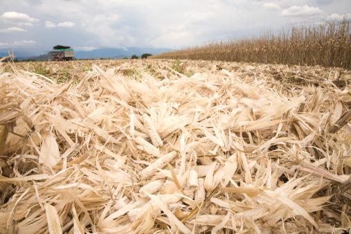 欧盟研究机构称生物燃料政策将推升食品价格